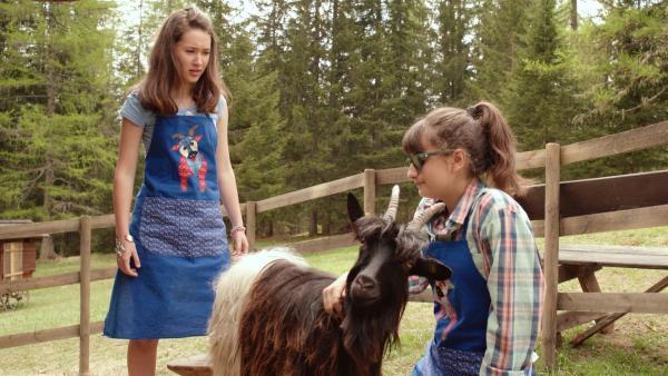 Bauernhofarbeit für Mia (Margot Nuccetelli, l.) und Sara (Lucia Luna, r.). Sie wollen eine der Ziegen melken. | Rechte: ZDF/2017 Hahn & m4e Productions