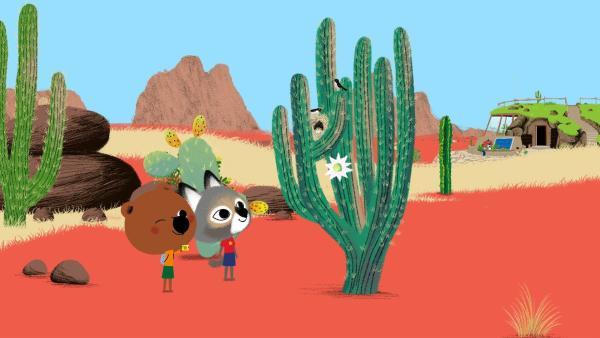 Mouk und Chavapa sind begeistert von den nistenden Vögeln im Kaktus. | Rechte: KiKA/Millimages