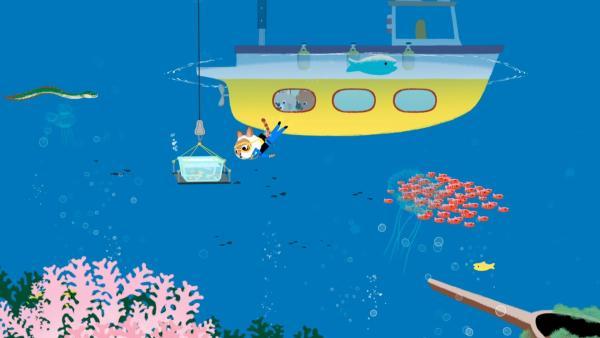 Mouk, Chavapa und Cassandra bringen die Babyfische aus der Aufzucht wieder an die Stelle, wo ihre Eier mitgenommen wurden. Cassandras Onkel taucht, um die Umgebung zu prüfen. | Rechte: KiKA/Millimages