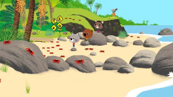 Auf der Weihnachtsinsel beobachten Mouk und Chavapa ein einzigartiges Naturschauspiel: Jedes Jahr wandern die Krabben der Insel vom Wald ans Meer, um dort ihre Eier abzulegen. | Rechte: KiKA/Millimages