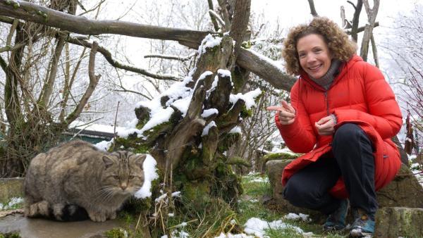 Wildkatzen sehen Hauskatzen zwar sehr ähnlich, sind aber extrem scheu und verstecken sich in unseren Wäldern. Gesa erfährt, warum dort nur noch ein paar Tausend von ihnen leben. | Rechte: WDR/tvision