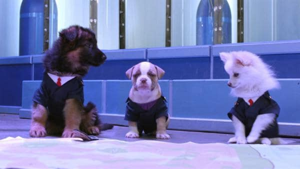 Ein Bösewicht hat alle Agents in Hundebabies verwandelt. Was nun? | Rechte: hr/Odd Productions LLC