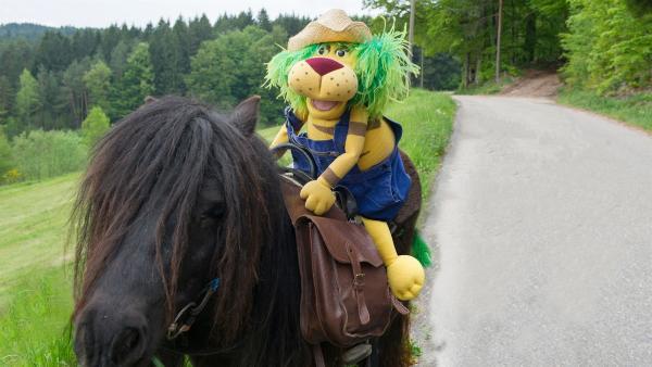 Heute steht ein Ausflug mit den Ponys auf dem Programm. | Rechte: SWR/Alexander Kluge