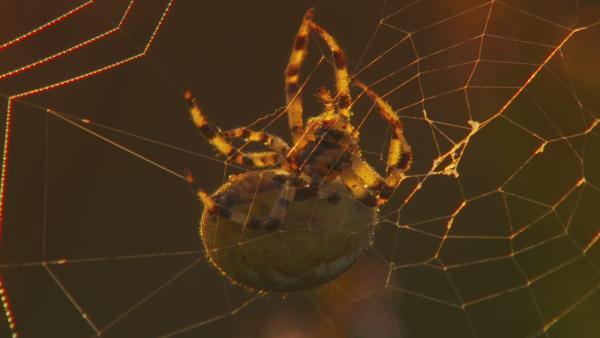 OLI entdeckt eine Spinne mit Kreuz auf dem Rücken. Er hat Angst, dass die Spinne giftig ist. | Rechte: KiKA