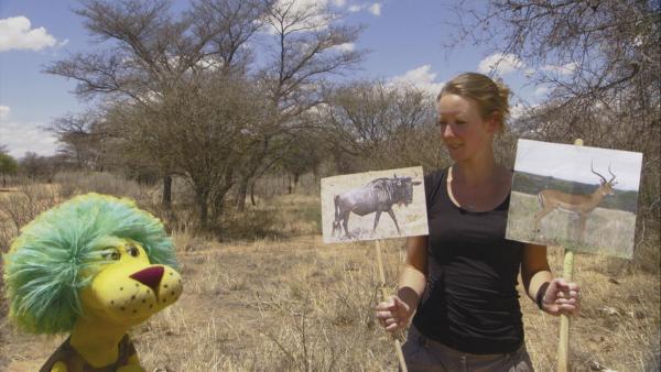 OLI will den Loewen in Afrika das Jagen beibringen. Dabei hilft ihm seine Assistentin Davina. | Rechte: SWR /Eikon Südwest GmbH