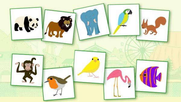 Finde die richtigen Paare und bringe die Tiere in Peeks Zoo wieder zusammen! | Rechte: /KiKA