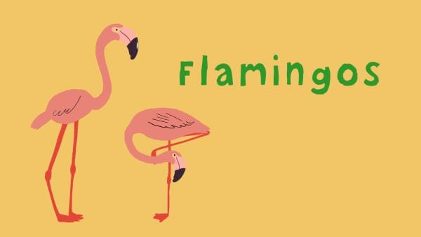 Flamingos | Rechte: KiKA/2018 Igloo Productions Ltd.