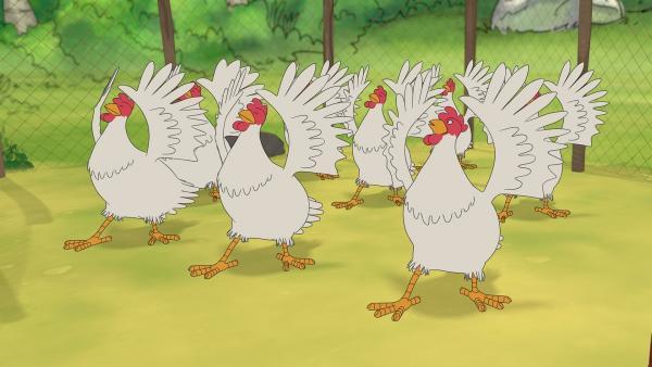 Die Hühner sind schon seit Tagen in großer Aufregung, denn sie studieren eine Ballettaufführung für Petterssons Geburtstag ein. Und das voller Grazie! | Rechte: ZDF/Edel SE