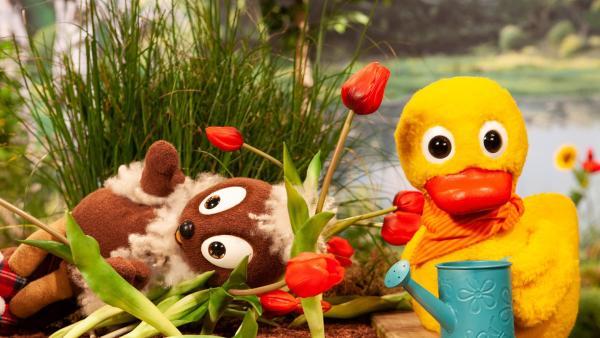 Pitti landet auf dem Blumenbeet. | Rechte: rbb/Christian Merten