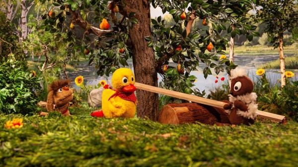 Moppi wartet darauf, dass seine Lieblingsbirne reif wird und zu Boden fällt. Damit er nicht tagelang dasitzen muss, wollen Pitti und Schnatterinchen ihm helfen und die Birne pflücken. | Rechte: rbb/Christian Merten
