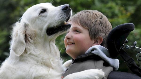 Jenson mit Assistenzhund Doreen. Der 11-jährige Jenson  hat SMA, eine seltene Muskelkrankheit und sitzt deshalb im Rollsstuhl. Seit vielen Jahren wünscht er sich einen Assistenzhund, der ihm das Leben leichter und schöner machen kann. | Rechte: Tatjana Kreidler