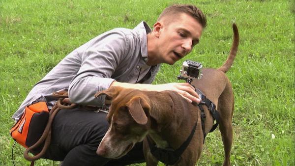 """""""pur+""""-Moderator Eric Mayer bereitet sich mit seinem Hund Caramelo auf eine Wildschweinbegegnung vor. Um den entscheidenden Moment live miterleben zu können, wird Caramelo mit einer eigenen Kamera ausgestattet. Wie nah wird er dem Wildschwein wohl kommen?   Rechte: ZDF/Susanne Kaupp"""