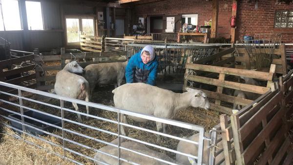 Die Schafe stehen im Trockenen. Bevor die Sturmflut kommt, müssen Kjell und seine Familie alle Tiere und Geräte rund um ihre Warft in Sicherheit bringen.  Sie wohnen auf Nordstrandischmoor - einer Hallig vor der nordfriesischen Küste.   Rechte: ZDF/Eva Werdich