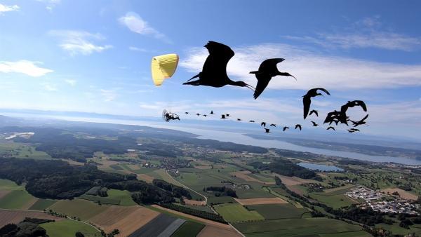1000 km vom Bodensee bis in die Toskana - das ist die Flugroute, die die Forscher des Waldrappteams den Waldrappen zeigen und zurücklegen müssen. Wenn sie es nicht schaffen, dann ist die Vogelart weiterhin als Zugvogel vom Aussterben bedroht. | Rechte: ZDF/Forscher Waldrappteam
