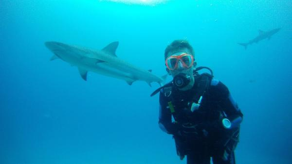 pur+ - Stuntman des Wissens taucht mit karibischen Riffhaien | Rechte: ZDF/Bettina Strickhausen