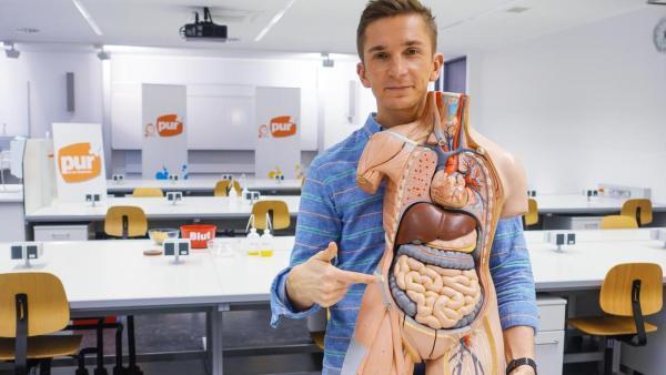Eric mit Anatomie-Torso | Rechte: ZDF