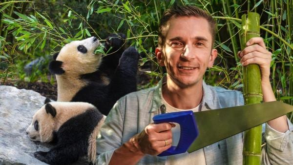 PUR+ - Panda-Bären | Rechte: Imago, ZDF