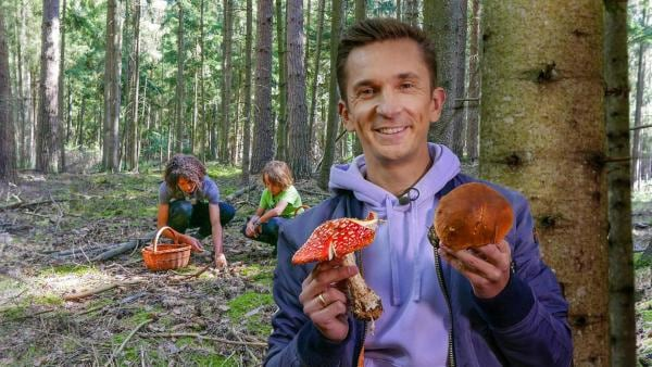 PUR+ - Pilze | Rechte: ZDF