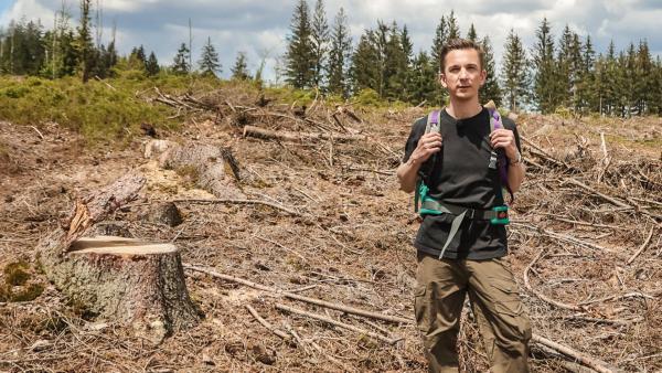 PUR+ - Wald | Rechte: ZDF