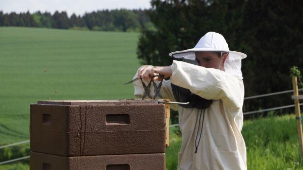 Als Imker hat der 13-jährige Maximilian seine Bienenvölker immer im Blick. Denn ob es seinen Bienen gut geht und wie viel Honig sie sammeln, hängt auch davon ab, ob Maximilian erkennt und versteht, was in einem Bienenvolk gerade vor sich geht. | Rechte: KiKA/Matthias Eder
