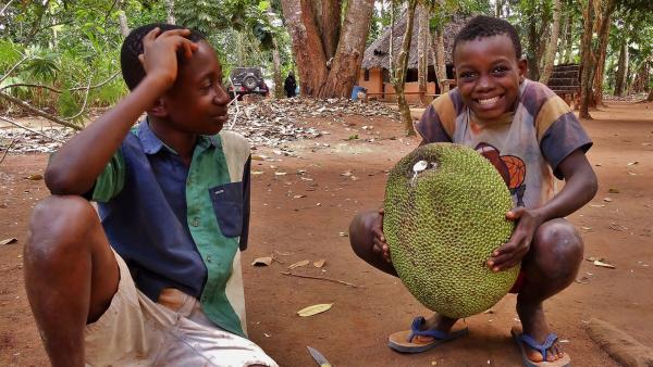 Rashidi (l.) und Hamisi mit einer bis zu 15 kg schweren Jackfrucht. | Rechte: SWR/Frank Feustle