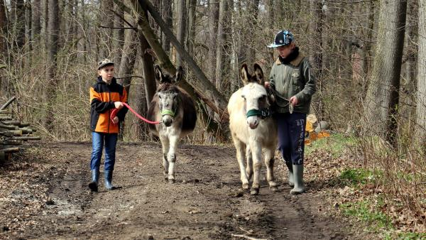 Zusammen mit seinem besten Freund Pascal geht Julian mit den Eseln Felix und Little Sunshine spazieren. Da Felix zu dick ist, muss er sich jetzt viel bewegen. | Rechte: MDR