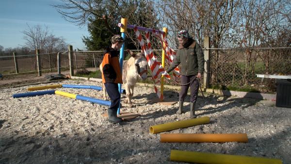 Im Parcours versuchen die Freunde Felix an verschiedene Gegenstände und Geräusche zu gewöhnen. | Rechte: MDR