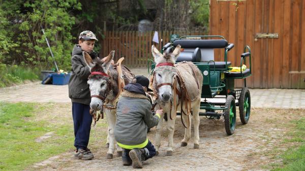 Die beiden Freunde machen die Esel für ihren ersten gemeinsamen Ausflug startklar. | Rechte: MDR