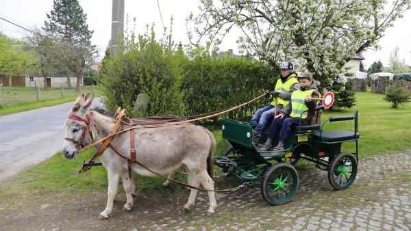 Lange haben sich die beiden Freunde auf diesen Ausflug vorbereitet. Julian hat seit kurzem eine Kutschfahrerlaubnis. | Rechte: MDR