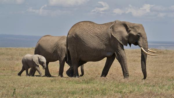 Auch eine Elefantenfamilie hat sich hier niedergelassen. | Rechte: SWR/ff-Movie tv Film- und Fernsehproduktion
