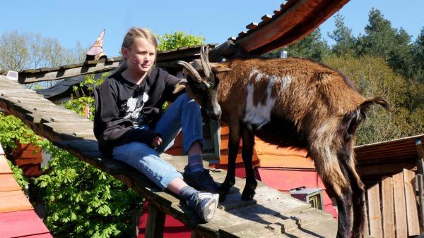 Oft besucht Janko die Ziegen auf dem Dach. | Rechte: rbb/Klaus Tümmler