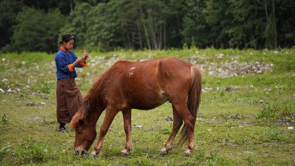 Tshering geht nach Handynetz suchend an einem Pferd vorbei. | Rechte: SWR/Thinley Namgay