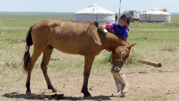 Die tägliche Pferdepflege bei ihrem Lieblingspferd macht Erdene viel Spaß. | Rechte: rbb/Erik Lötsch