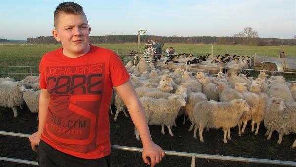 Hannes lebt im brandenburgischen Möllendorf auf einem Bauernhof. Fast täglich hilft er seinem Vater bei der Arbeit mit rund 600 Schafen. | Rechte: KiKA/Stefanie Köhne