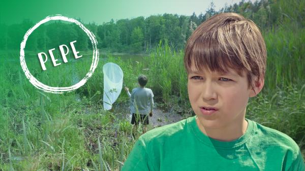 Pepe und die Welt der Insekten | Rechte: KiKA