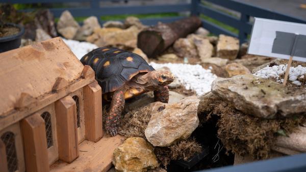 Dass eine Schildkröte so eine große Rolle auf der Mission von Finja, Joyce und Paul spielen wird, hätten alle drei nicht gedacht. | Rechte: mdr/Saxonia Media/Felix Abraham