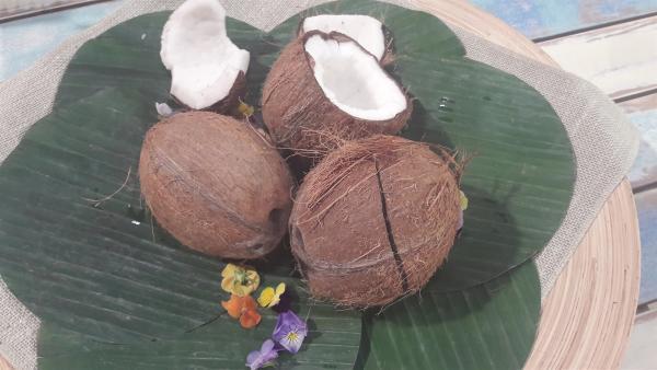 Kokosnüsse haben eine harte Schale und müssen aufwendig geknackt werden. | Rechte: ZDF/ORF