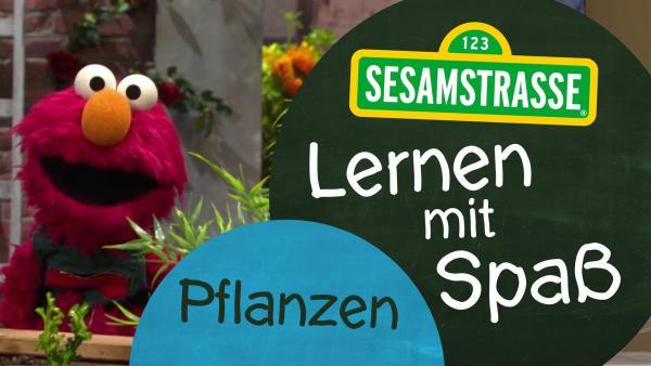 Elmo von der Sesamtraße neben einer Grafik. Darauf das Sesamstraßenlogo und der Folgentitel: Pflanzen. | Rechte: NDR