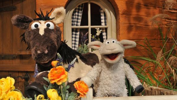 Wolle und Pferd vor dem Möhrenhaus. | Rechte: NDR/UWE ERNST
