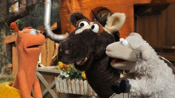 Finchen nistet sich als Dauergast bei Wolle und Pferd ein. | Rechte: NDR/UWE ERNST