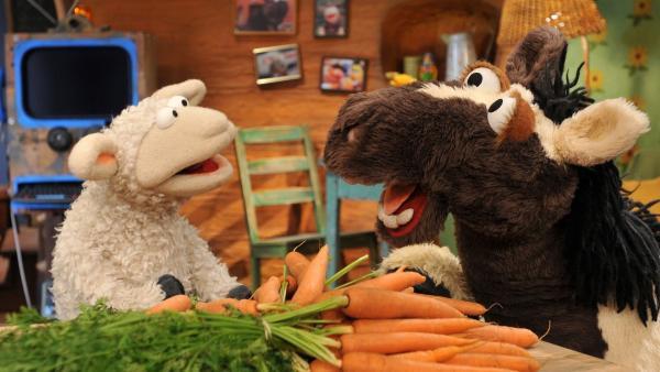 Pferd und Wolle überlegen, was sie kochen sollen. | Rechte: NDR/UWE ERNST