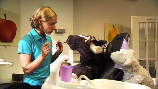 Erst hat Pferd etwas Angst, aber dann hat Zahnärztin Rike eine ganz einfache Erklärung für sein Zahnproblem. | Rechte: NDR