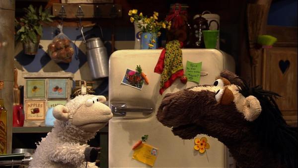 Pferd möchte mit Wolle ein leckeres Frühstück essen. | Rechte: NDR
