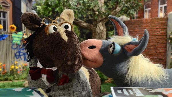 Marie ist die neue Posteselin in der Sesamstrasse und Pferd möchte sie beeindrucken... | Rechte: NDR/Uwe Ernst