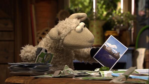 Wolle hat nur Pech mit seinen Dinobildern. Ständig Doppelte! | Rechte: NDR