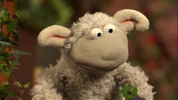 Wolle scheint nur Pech zu haben. | Rechte: NDR