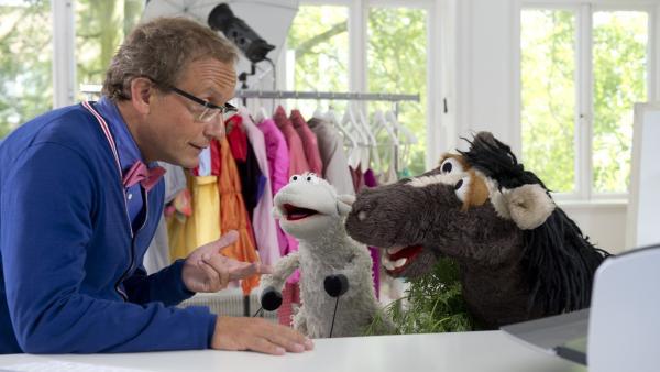 Pferds Tante Hüfli hat bald Geburtstag und er weiß einfach nicht, was er ihr schenken soll. Mit Günnis Hilfe kommen Wolle und Pferd auf die Idee, der Tante ein schönes Foto von sich machen zu lassen. | Rechte: NDR/Sesame Workshop/Thorsten Jander