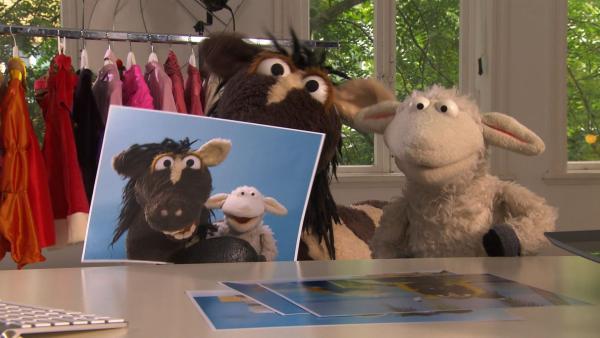 Pferds Tante Hüfli hat bald Geburtstag und er weiß einfach nicht, was er ihr schenken soll. Mit Günnis Hilfe kommen Wolle und Pferd auf die Idee, der Tante ein schönes Foto von sich machen zu lassen. | Rechte: NDR/Sesame Workshop