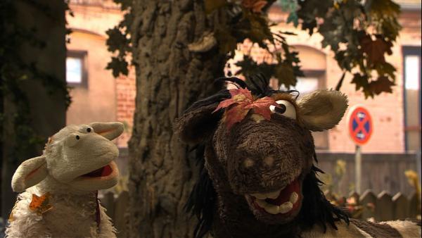 Wolle und Pferd sitzen im Garten, doch es ist so kalt und windig geworden. Dann fallen auch noch die Blätter von den Bäumen - das muss der Herbst sein! Die beiden wollen aber noch gar keinen Herbst haben und beschließen, ihn aufzuhalten. | Rechte: NDR/Sesame Workshop