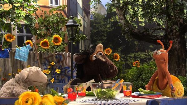 Wolle und Pferd haben Finchen zum Salatessen eingeladen. | Rechte: NDR/Sesame Workshop